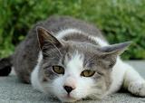 cat132.jpg